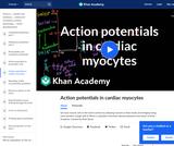 Action Potentials in Cardiac Myocytes