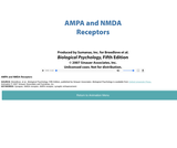 AMPA and NMDA Receptors