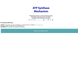 ATP Synthase Mechanism