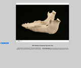 360-degree rotation of a Pig Lower Jaw